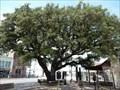Image for Fleming Oak - Comanche, TX
