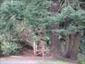Image for Lacamas Creek Trail, Camas, Washington