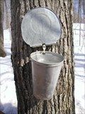Image for PURPLE WOODS MAPLE SYRUP FESTIVAL - Oshawa, Ontario CANADA