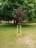 Image for Frank Gloversmith dedicated tree - University of Sussex, Brighton, UK
