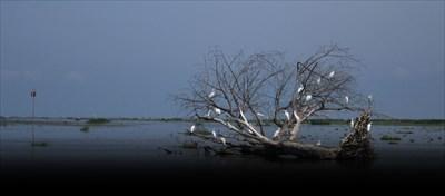 Une rive du Lac St-Pierre au bout de la Pointe Yamachiche.  A shore of Lake St-Pierre at the end of the Pointe Yamachiche.