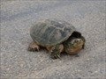 Image for Turtle Crossing - Apache Avenue - Terral, OK