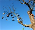 Image for Shoe Tree an der Gera in Erfurt, Thüringen, Germany