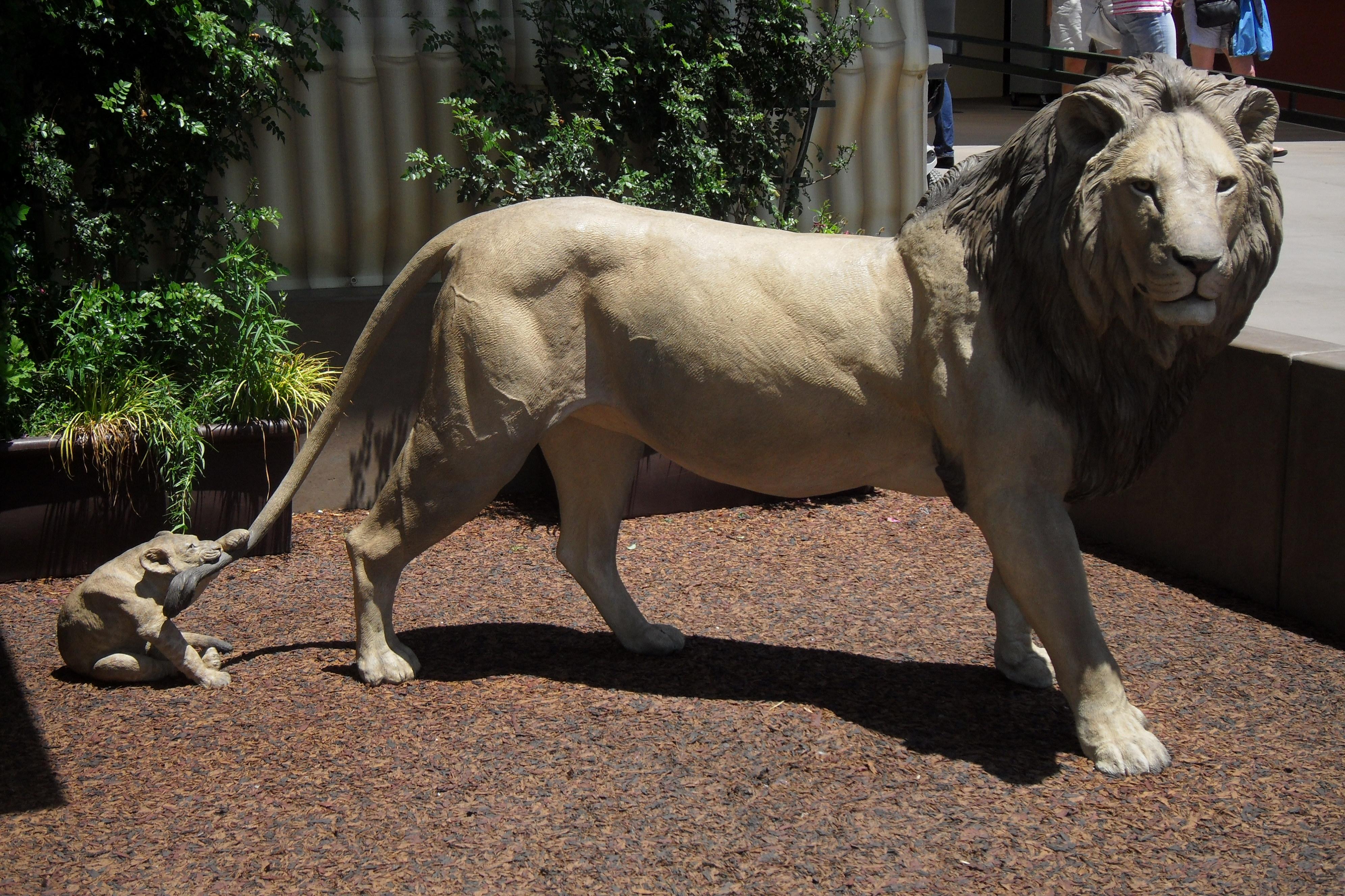 San Diego Zoo Entrance Lions San Diego Ca Image