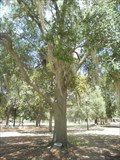 Image for POW/MIA Freedom Tree Memorial - Gainesville, FL