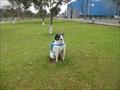 Image for San Miguel Plaza Dog  -  Lima, Peru