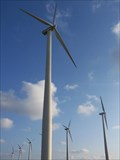 Image for Wethersfield New York Windmill Farm
