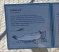 Image for Harbor Seal  -  Pebble Beach, CA