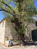 Image for Peuplier vénérable de la Liberté, Bizac, Gard.