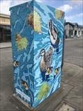 Image for Ducks - San Lorenzo, CA