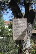 Image for OLDEST Olive Tree & Grapevine -- Mission San Gabriel Archangel, San Gabriel CA