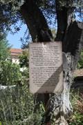 Image for OLDEST Olive Tree & Grapevine -- Mission San Gabriel Archangel, San Gabriel CA