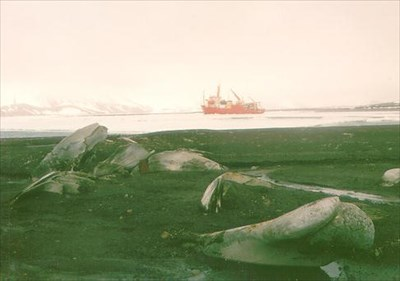 Bleached whale bones at Whalers Bay, Deception Island. In the background is the NSF research vessel Polar Duke at anchor in the bay.