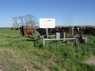 Cemetery in the background, with cattle to greet you.  Today