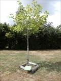 Image for arbre de la Liberte - Sansais, Nouvelle Aquitaine, France
