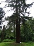 Image for Sequoiafarm - Nettetal-Kaldenkirchen - NRW - Germany