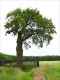 Image for The Royal Oak, Boscobel, Staffordshire UK
