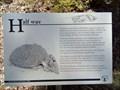 Image for Half way - Bald Rock N.P., NSW, Australia