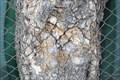 Image for Baum isst Zaun / Tree eats fence - Wien, Austria