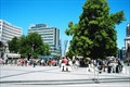 Image for Cathedral Square, Christchurch