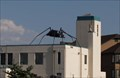 Image for Giant Black Spider - Reno, NV
