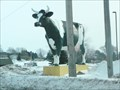 Image for Sissy the Cow - Ehlenbach's Cheese - DeForest, WI