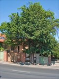 Image for Veszprem's Yew