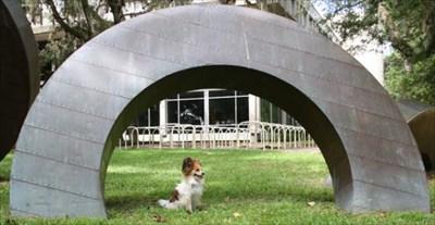 My Papillon, Bijou, takes in this modern sculpture.