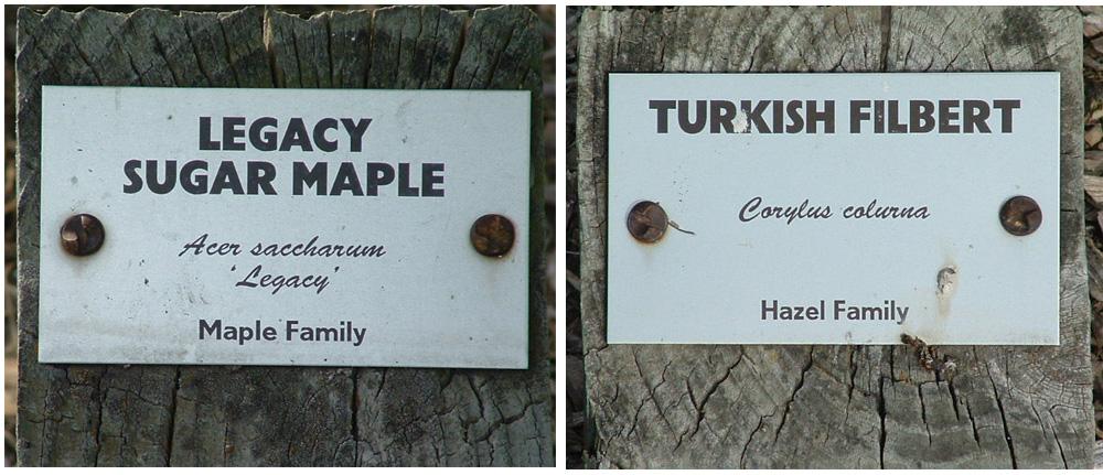 sample tree labels in foster park arboretum