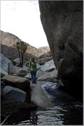Image for Palm Canyon - Anza Borrego State Park