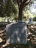 Image for Fresno Bicentennial Oak Tree - Fresno, CA
