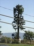 Image for Marten Ave Pine Tree - San Jose, CA