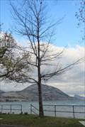 Image for Pearl M. Betts - Penticton, British Columbia
