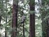 Zip Liner 2, Mt. Hermon, CA