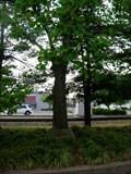 Image for Bi-Centennial Liberty Tree - Johnson City TN