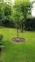 Image for Barbara Yvonne & Clifford Roy Parker tree - Edwalton Parish Church Garden - Edwalton, Nottinghamshire