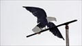 Image for Bald Eagle Weathervane - Arbor Crest Estate Winery - Spokane Valley, WA