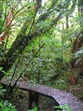 Image for Centre of the North Island Boardwalk. Pureora Forest, North Is. New Zealand.