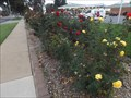 Image for City Rose Garden - Wangaratta, Victoria, Australia