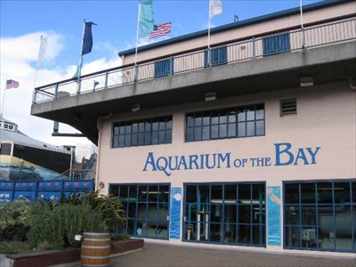 Aquarium of the bay san francisco ca official local - San francisco tourist information office ...