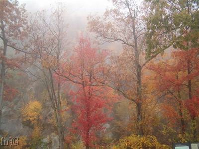 Fall colors in the fog.