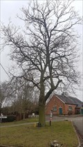 Image for Queen Victoria Diamond Jubilee Tree - Peatling Parva, Leicestershire