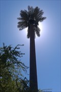 Image for Talking Tree - Chandler & 46th - Phoenix, AZ