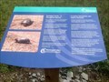 Image for Blanding's Turtle - Ottawa, ON