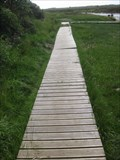 Image for Stepping Stones and Boardwalk - Nr Dwyran, Anglesey, North Wales, UK