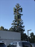 Image for Sequoia Tree - San Jose, CA