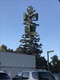 Image for Sequoia Tree - San Jose, CA