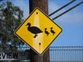 Image for Duck crossing - Barwon River, Geelong