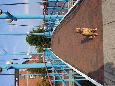 My dog Honey on the bridge.