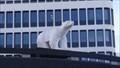 Image for L'ours blanc hommage à Pompon - Rennes, Bretagne